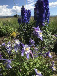 Flowers in a flower garden