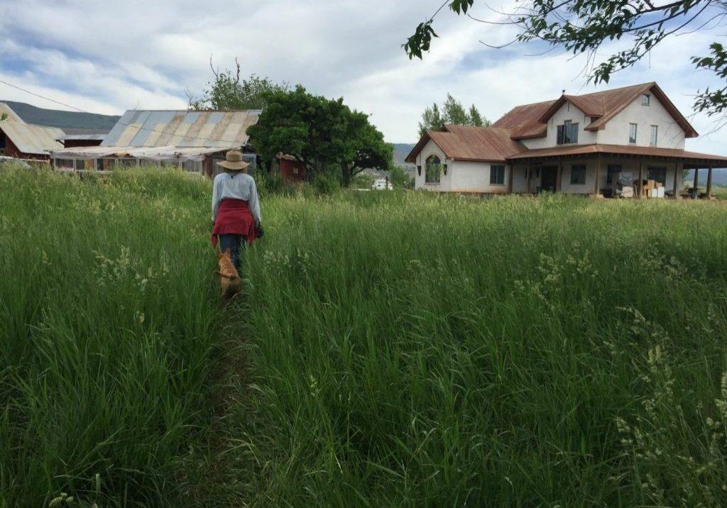 A person walks through a farm field